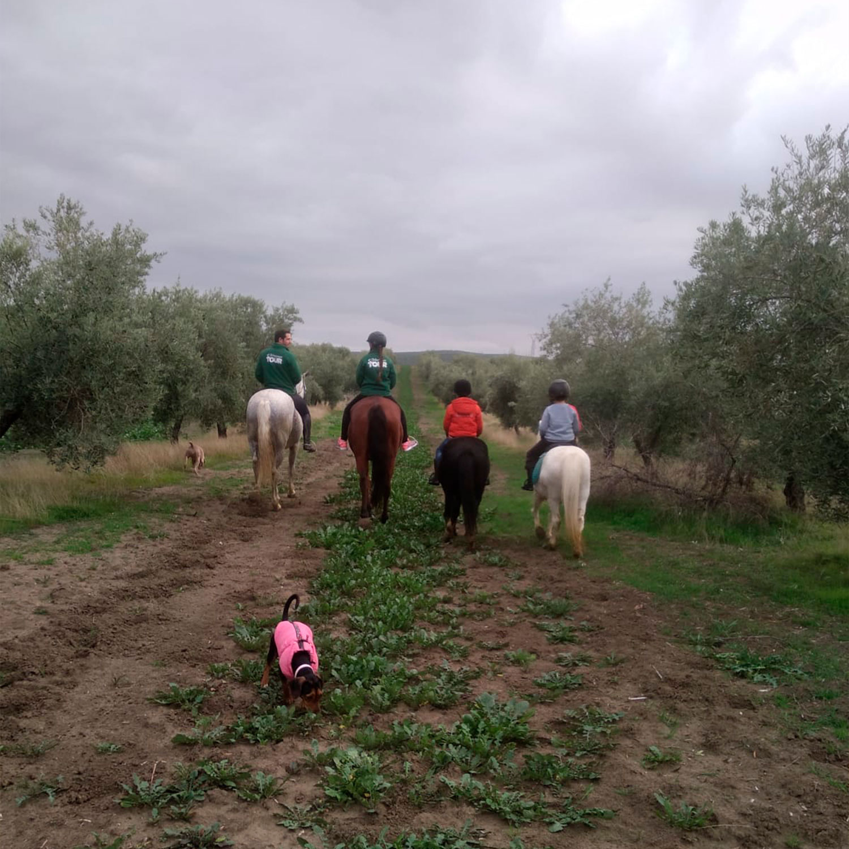 Paseos a caballo por el campo